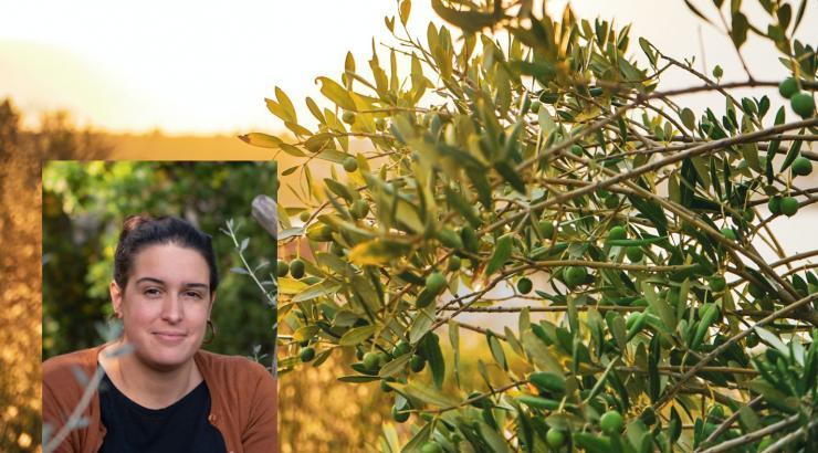Huiles d'olive d'Italie : DOP et IGP pour la garantie